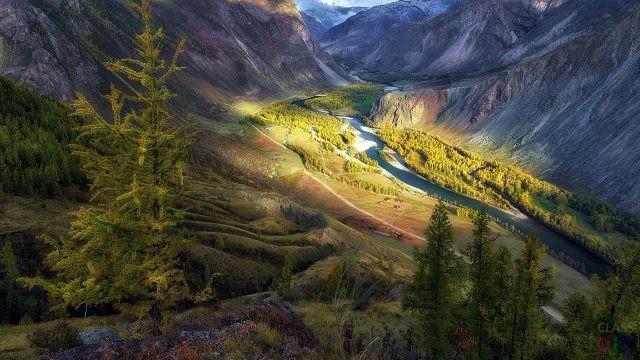 Алтайский заповедник (27 фото)