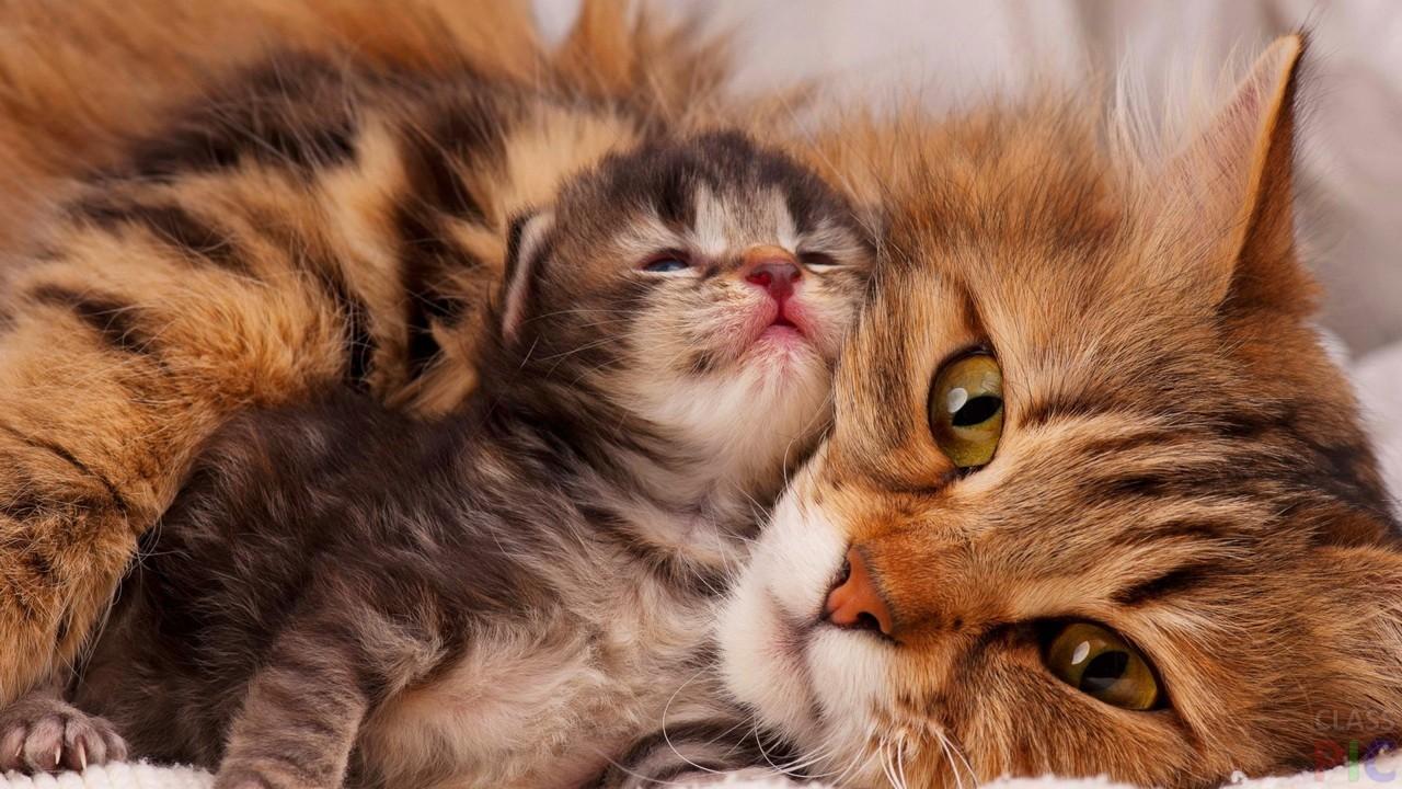Фото кошки с котятами
