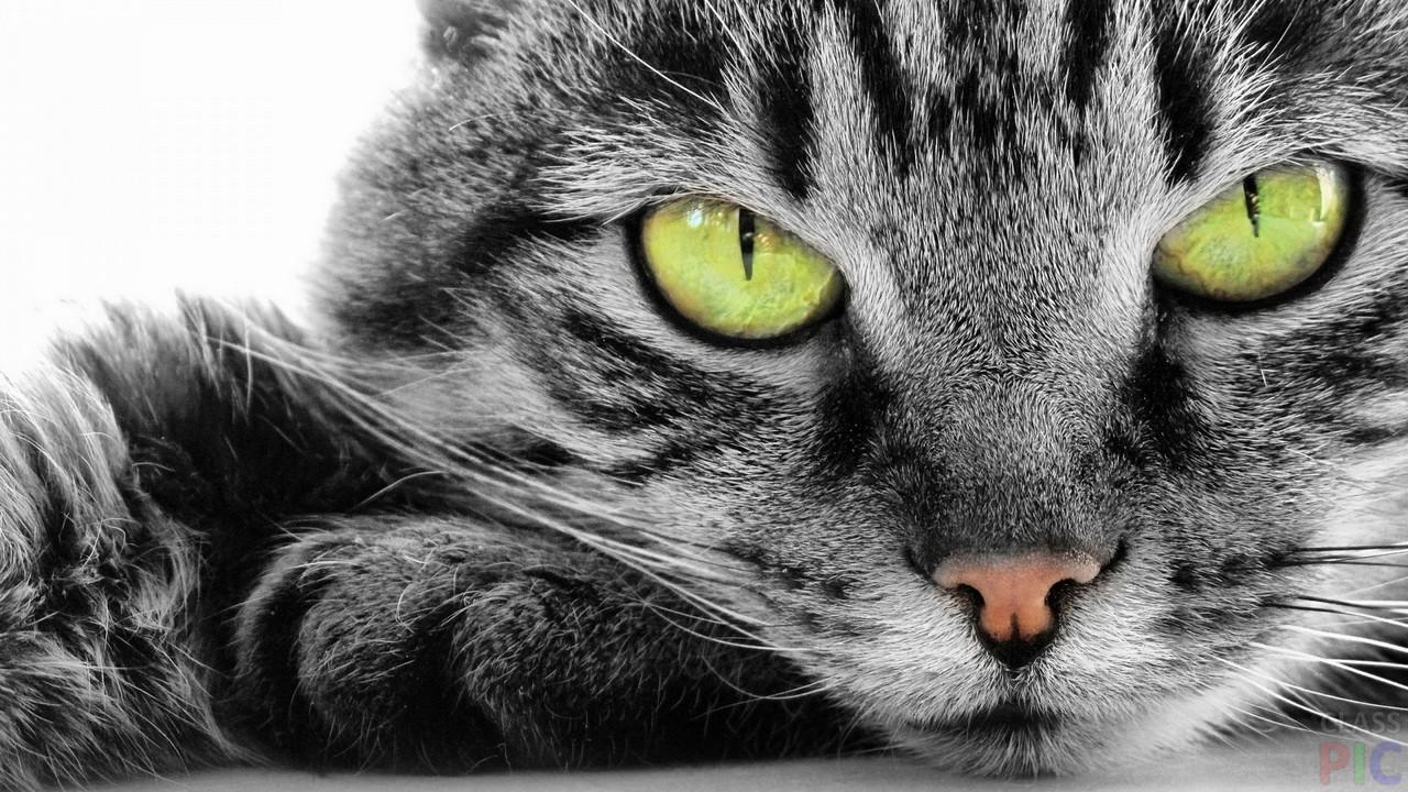 Глаза кошки (36 фото)
