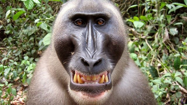 Фото обезьян с названиями
