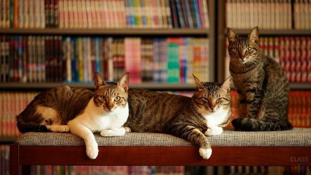 Домашние кошки (37 фото)
