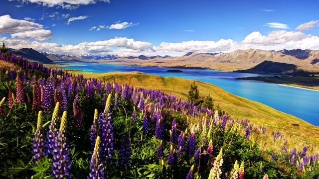 Новая Зеландия (38 фото)