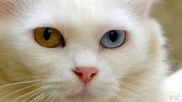 Кошки мира (31 фото)