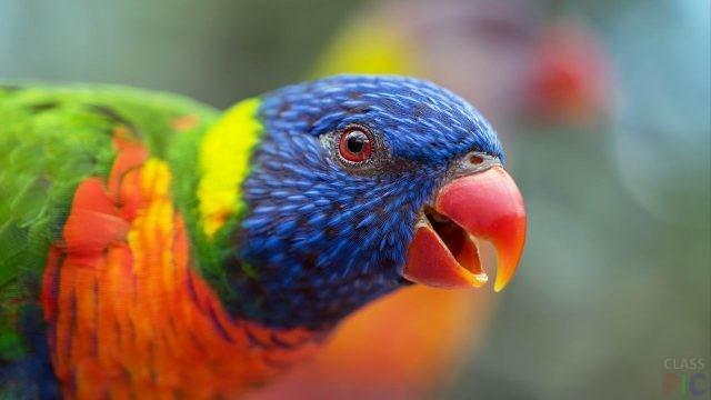 Породы попугаев (29 фото)